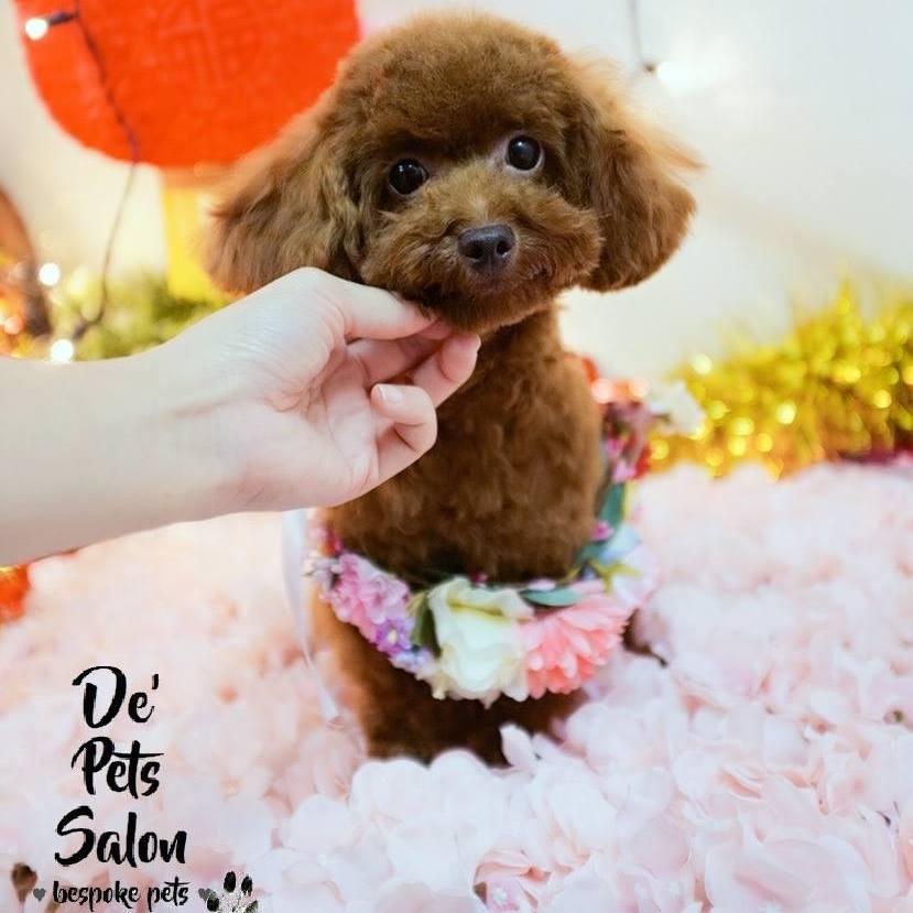De' Pets Salon