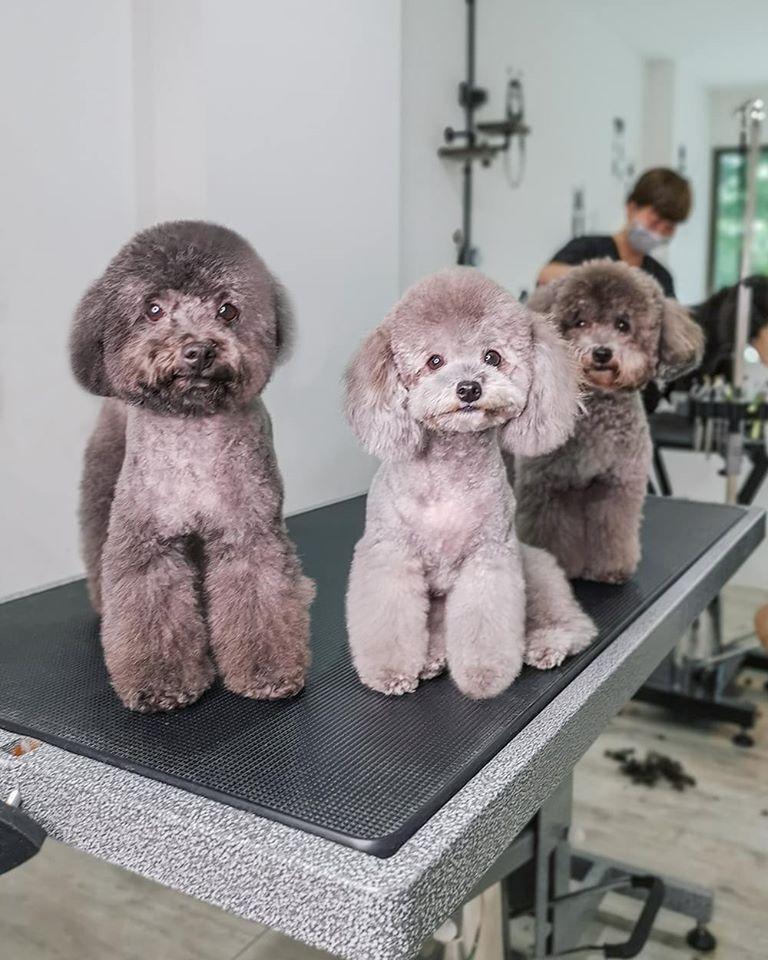 Doggyhaus Salon